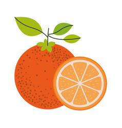 white background with one orange fruit and orange vector image