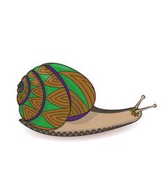 cute snail zentangle wild life cochlea zen vector image