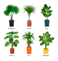 decorative indoor palm trees in pots vector image