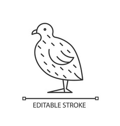 Japanese quail linear icon vector