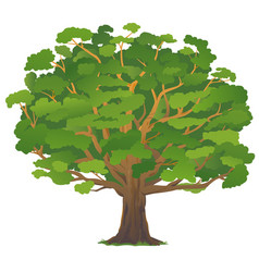 One old oak tree isolated vector