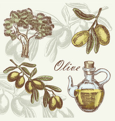 olive set hand drawn vector image