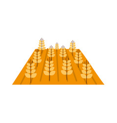 wheat crop isolated icon vector image vector image