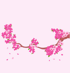 blooming sakura branch over light pink vector image