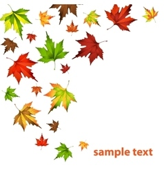 Autumn leaf fall vector image vector image