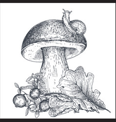 composition hand drawn forest mushroom vector image
