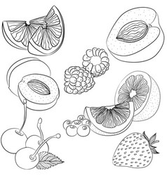 line art various fruits vector image