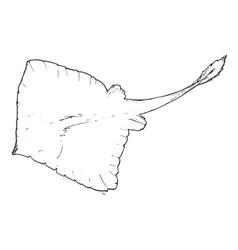 manta vector image