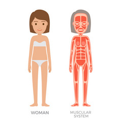muscular system young woman colorful banner vector image