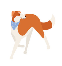 sighthound or gazehound lovely cute hunting dog vector image