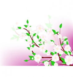 spring blossom vector image