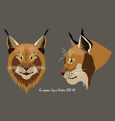 two portraits of lynx vector image