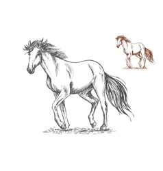 Running white horse sketch portrait vector image