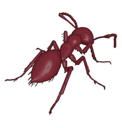 back a 3d ant on white background vector image