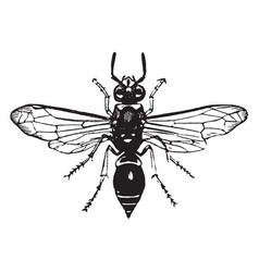 Potter wasp vintage vector
