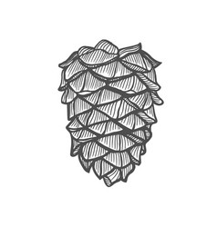 hand drawn pine cone vector image