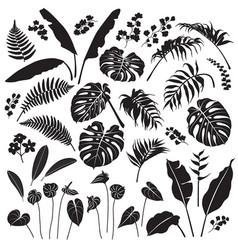 Tropical leaves and flowers silhouette set vector