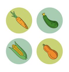 White background with vegetables carrot zucchini vector