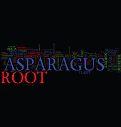 Asparagus root text background word cloud concept vector