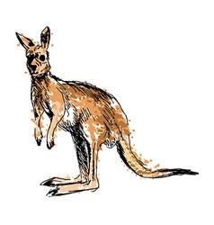 Colored hand drawing a kangaroo vector