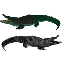 crocodile color and black silhouette vector image