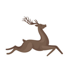 Forest graceful deer with antlers in running pose vector