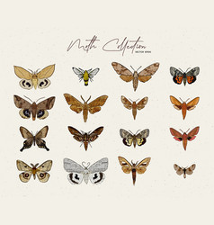 Moth collection hand draw sketch vector