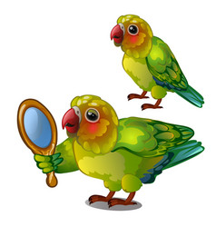 parrot lovebird admiring her own reflection in the vector image