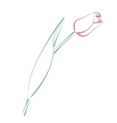 Sketched tulip vector image