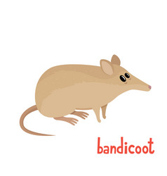 cute little bandicoot in cartoon style vector image