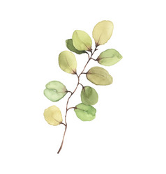 eucalyptus leaves and branches watercolor hand vector image