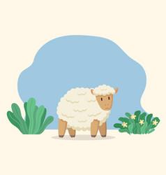 Farm woolly sheep rustic ewe or jumbuck on meadow vector