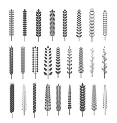 set of spica brushes vector image