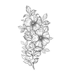 Hand drawn dog-rose branch with flowers and leaves vector