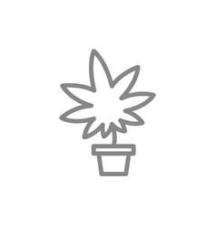 medical marijuana cultivation cannabis leaf vector image