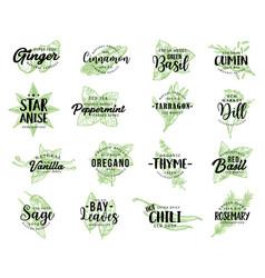 Organic herbs spices seasonings sketch lettering vector