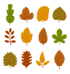 set of twelve different autumn leaves vector image