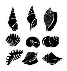 set of sea shells black vector image