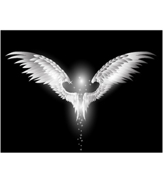 angel wings on dark background vector image