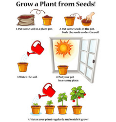 Diagram showing how to grow plant from seeds vector