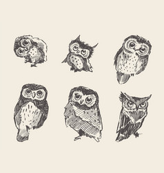 Set drawn owls vintage style vector