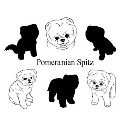 Set pomeranian spitz collection pedigree vector
