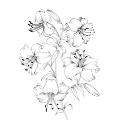 Lily flower composition vector image vector image