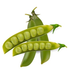 green peas vegetable with seed vector vector image vector image