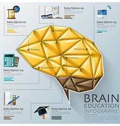 Brain Shape Three Dimension Polygon Education vector
