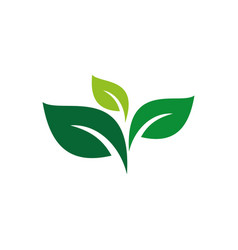 Green leaves star flower logo designlogo leaf vector