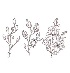 magnolia sketch art floral blossom branch and vector image
