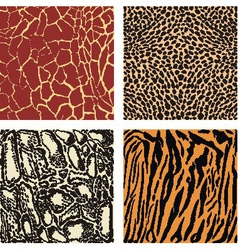 Animal color background vector image