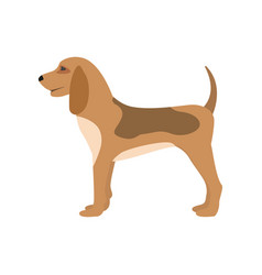 a cartoon hunting dog puppy vector image