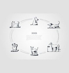 Dogs - different dog breeds walking eating from vector